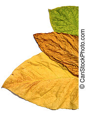 タイ, 葉, タバコ