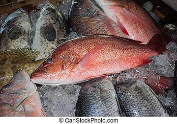 タイ, 魚マーケット, 新たに