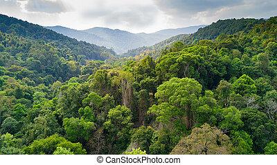 タイ,  rainforest, 航空写真, 光景