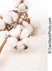 タオル, 綿, 植物, ふんわりしている