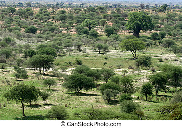 タンザニア, アフリカ, 国民, -, tarangire, park., サファリ