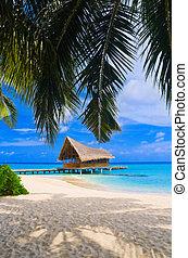 ダイビング, クラブ, 上に, a, 熱帯 島