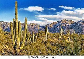 チューソン, アリゾナ, 砂漠, 光景