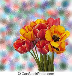 チューリップ, 春の花, 美しい