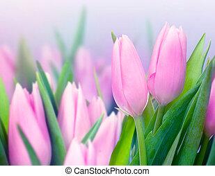 チューリップ, 春