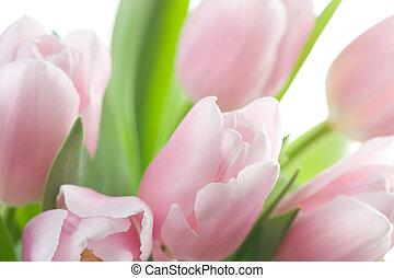 チューリップ, 春, 背景
