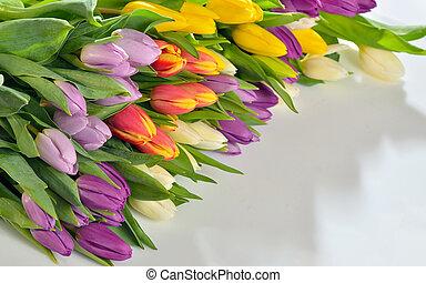 チューリップ, 白い花, 背景