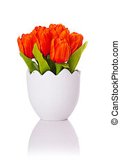 チューリップ, 白い花, 隔離された