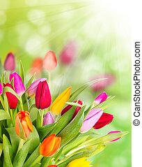 チューリップ, 花束, 美しい