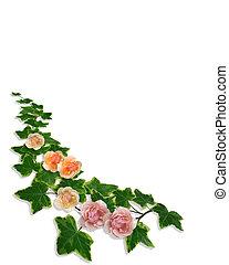 ツタ, ばら, ボーダー, 花