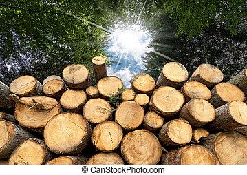 ツリーの森林, 山, 太陽光線, トランクス