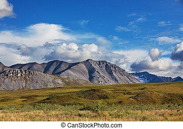 ツンドラ, 上に, アラスカ