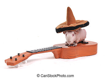 テンジクネズミ, 中に, 帽子, 上に, ギター