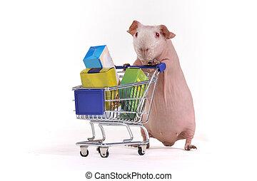 テンジクネズミ, 買い物客