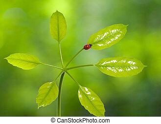 テントウムシ, 葉, 緑