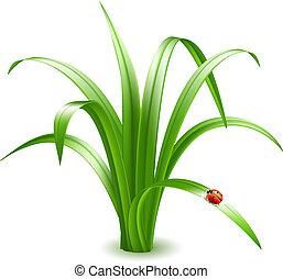 テントウムシ, grass., ベクトル, illustration.