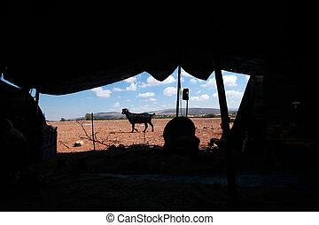 テント, life., nomadic, 黒, goat