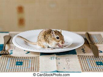 テーブル, 夕食, gerbil, ehave, mongolian