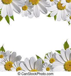 デイジー, コピー, 花, ボーダー, スペース