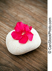 デリケートである, 花, 白, 石