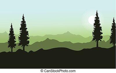 トウヒ, 春, 丘, 風景