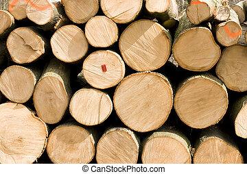 トウヒ, 積まれる, 森林, 木材を伐採する, の上
