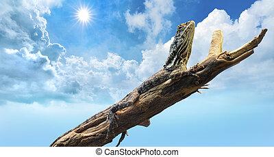 トカゲ, 下に, a, 暑い, 太陽