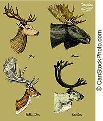 トナカイ, 鹿, 食用魚卵, 角, 頭, 型, 見る, 引かれる, 側, 枝角, オオシカ, 手, 雄鹿, 動物, イラスト, 雌鹿, ベクトル, ユーラシア人, 野生, アメリカヘラジカ, 刻まれる, ∥あるいは∥, 光景