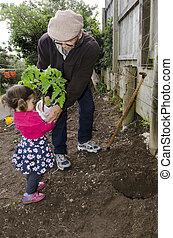 トマト, 植えつけ, 植物, おじいさん, 孫