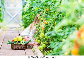 トマト, 面白い, わずかしか, 大きい, 手, greenhouse., 肖像画, 女の子, 収穫する, 子供