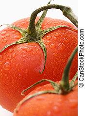 トマト, life., まだ