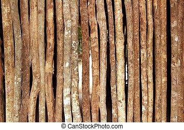 トランクス, 木製の家, 壁, ジャングル, rainforest