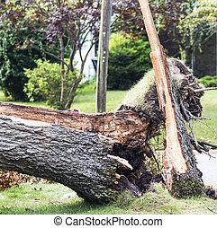 トランク, 嵐, 吹かれた, 下方に, 壊れた木