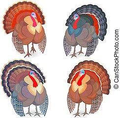 トルコ, デザイン, 鳥, コレクション, あなたの