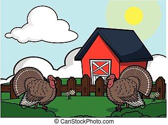 トルコ, 鳥, 農場