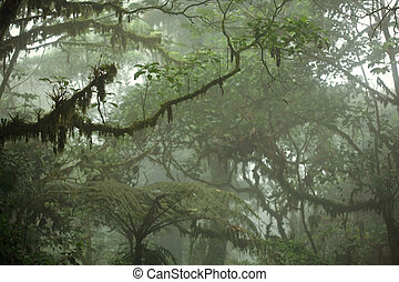 トロピカル, おおい, 森林, 雨