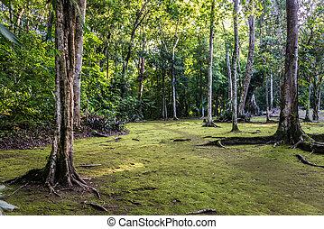 トロピカル, によって, 公園, tikal, 森林, ジャングル, guatemala, 旅行