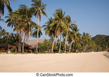 トロピカル, やし 浜, 木