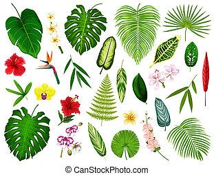 トロピカル, エキゾチック, 植物, そして, 花, 葉, ベクトル