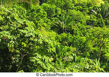トロピカル, ジャングル, 背景