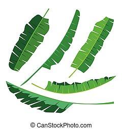 トロピカル, バナナ, 葉, コレクション, 隔離しなさい, vector., セット