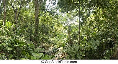 トロピカル, マレーシア, 庭