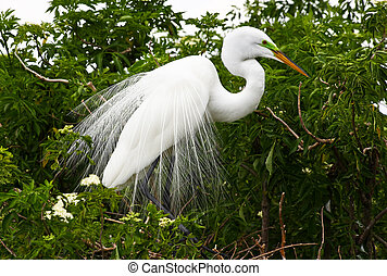 トロピカル, 公園, フロリダ, 鳥