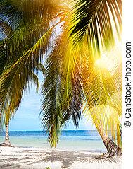 トロピカル, 夏, beach;