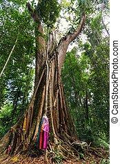 トロピカル, 巨大, 木