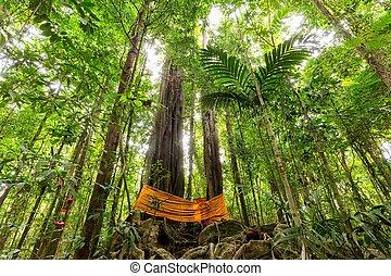 トロピカル, 巨大, 木,  rainforest
