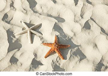 トロピカル, 恋人, 浜, あること, ヒトデ