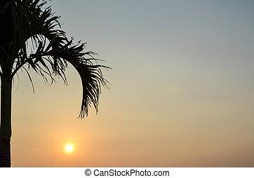 トロピカル, 日没