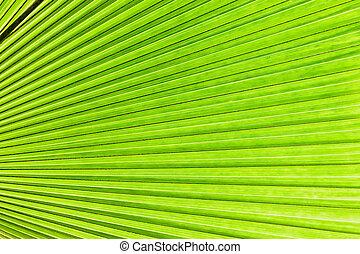 トロピカル, 明るい緑, 葉, palm., 抽象的, 自然, 手ざわり, エキゾチック, 幾何学的, 緑の背景