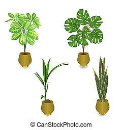 トロピカル, 植物, 中に, ポット, セット, 1(人・つ), vektor.eps